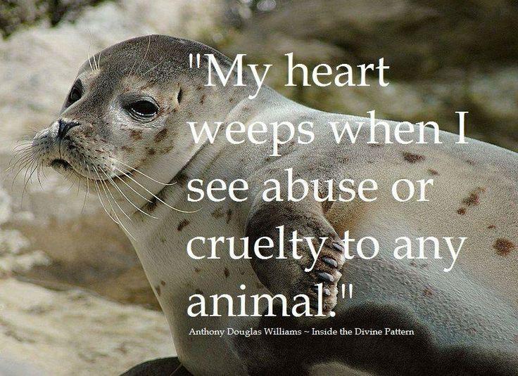 Animal Rights Quotes Cool Mein Herz Weint  Tierschutz  Pinterest  Animal