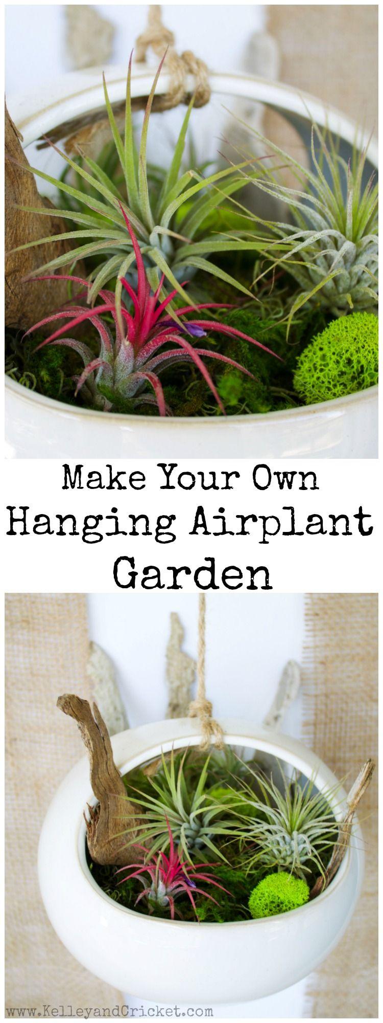 Hanging air plant garden mind body vision air