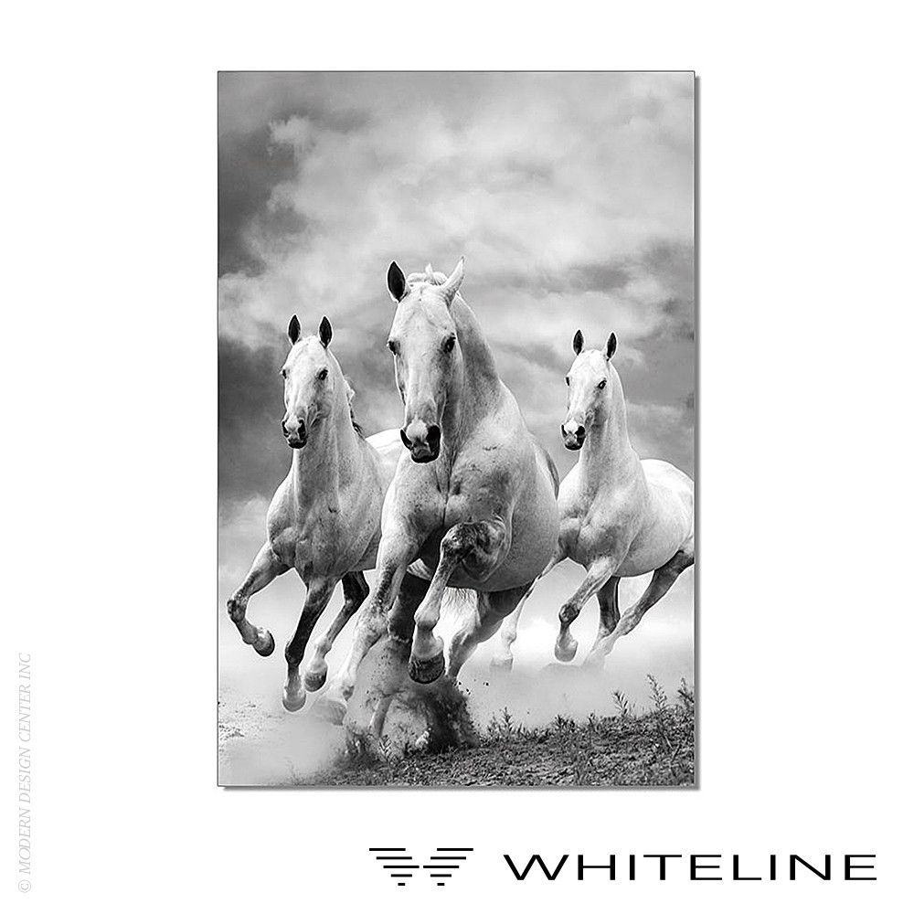 Whiteline mustangs black and white painting