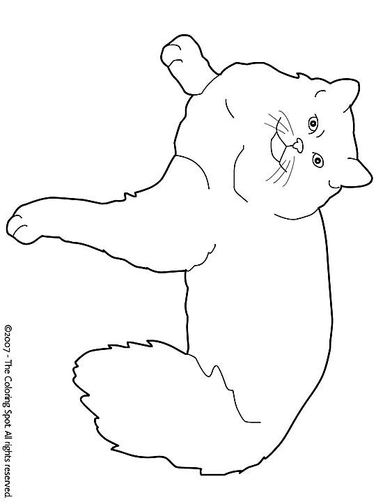 Quatang Gallery- Kleurplaat Poezen Kleurplaten Huisdieren Katten