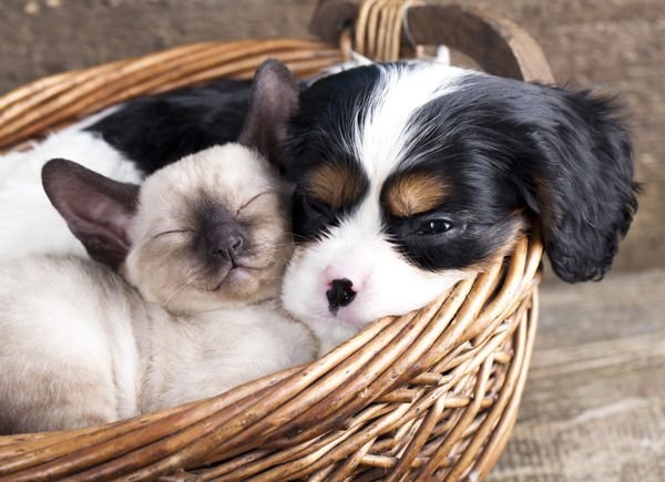 How to Introduce a New Dog to Your Resident Cat (or Vice Versa) | Dogster