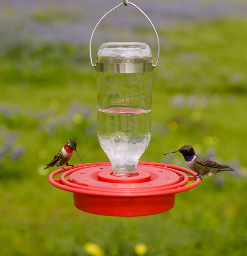 Best 1 Hummingbird Feeder 8 Oz Glass Hummingbird Feeders Humming Bird Feeders Attract Wild Birds