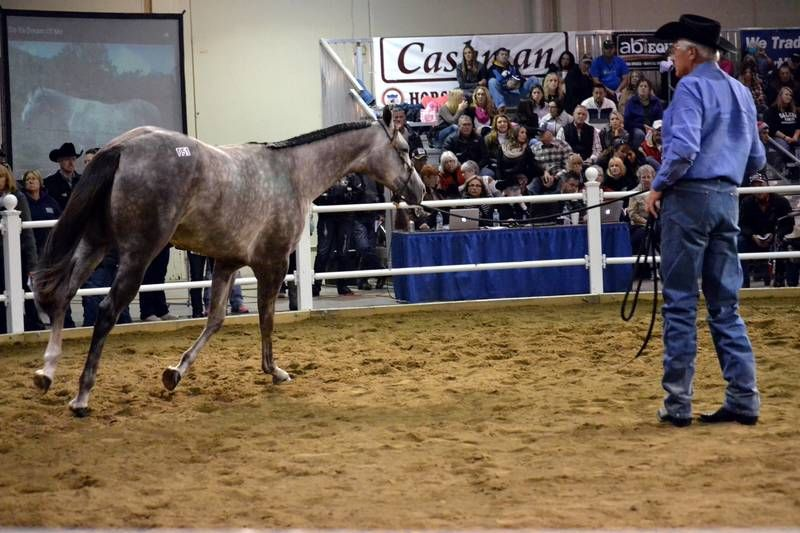 [photo via Quarterhorsecongress.com]