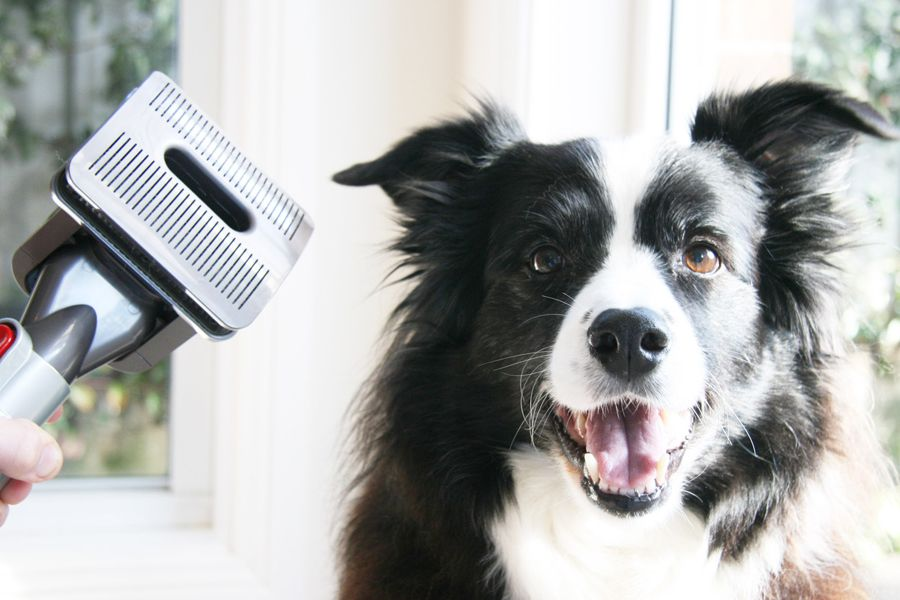 The Dyson Groom for Dummies (& ScardeyCats) Dog
