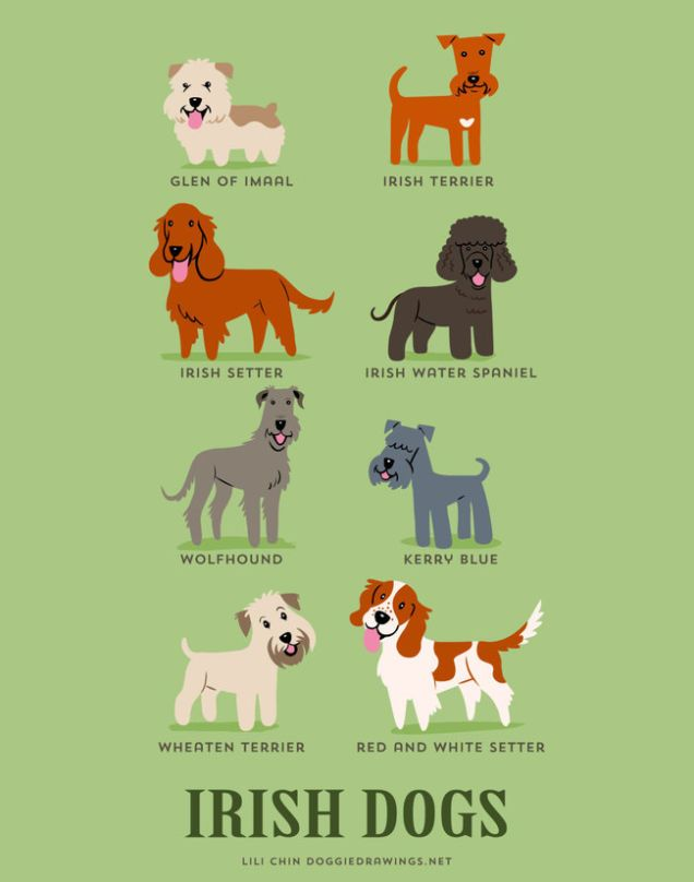 Adorable Drawings Of Dog Breeds Grouped By Their Place Of Origin Irish Dog Irish Dog Breeds Dogs Of The World