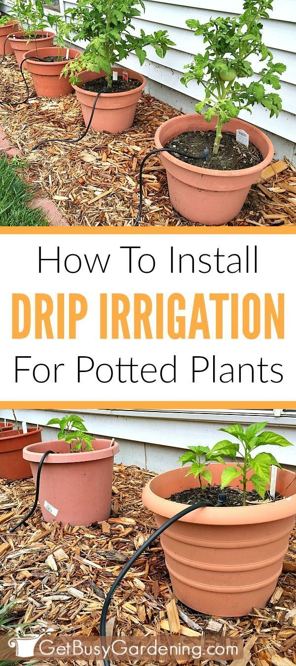 How To Install A Diy Drip Irrigation System For Potted Plants Plant Watering System Garden Watering System Drip Irrigation
