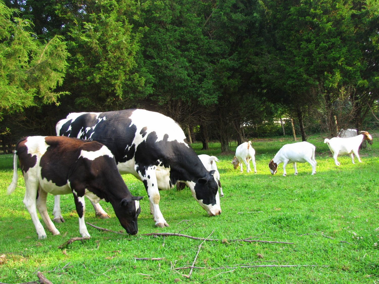A Fantastic Refuge In Blairstown Nj For Animals Rescued From The Food Farming Industry Animals Animal Rescue Farm Animals
