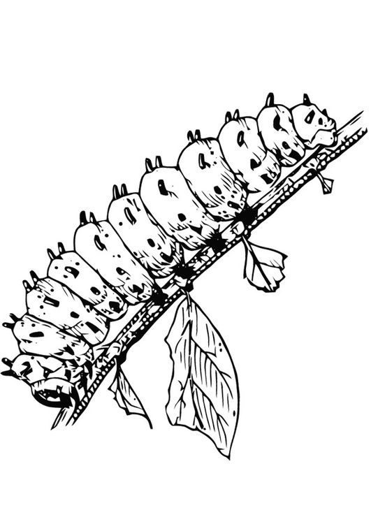 Malvorlage Raupe Coloring 3 Coloring Pages Caterpillar Und
