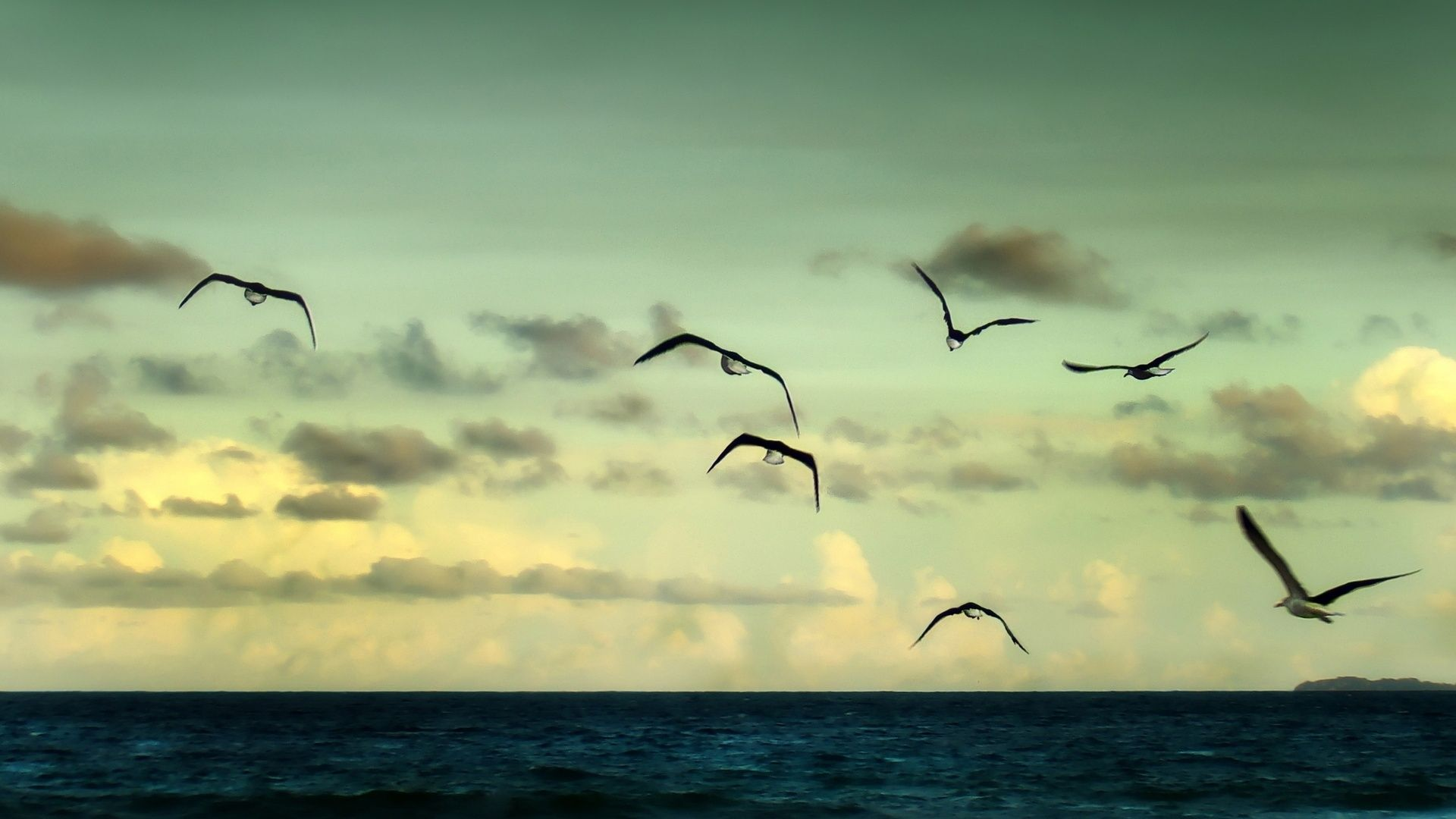 Seagull Sky Birds Hd Free Wallpapers 1080p Free Wallpaper Birds Sky