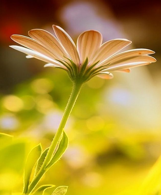 Most Beautiful Flowers in the World_28