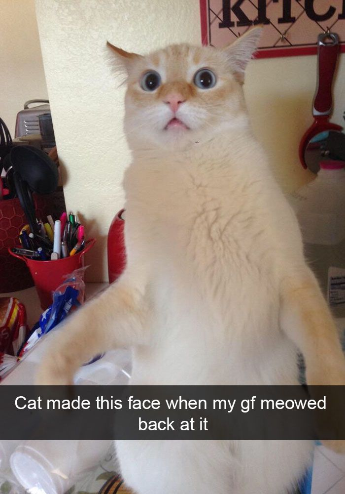 Hilarious Cat Snapchats That You Need To See Right Meow - Hilarious photographs faces pulled sneezing dogs cats