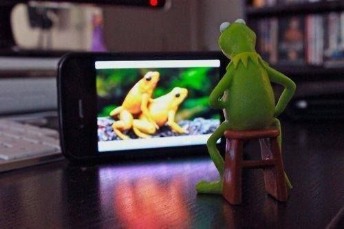 Cute Frog Porn - kermit the frog watching porn on his phone