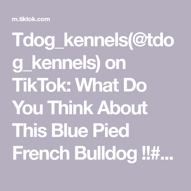 Tdog Kennels Tdog Kennels On Tiktok What Do You Think About This Blue Pied French Bulldog Pyp Blue Pied French Bulldog Pied French Bulldog French Bulldog