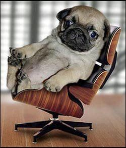 I Suppose This Was Inevitable Pugs Make Ridiculous Dogs But