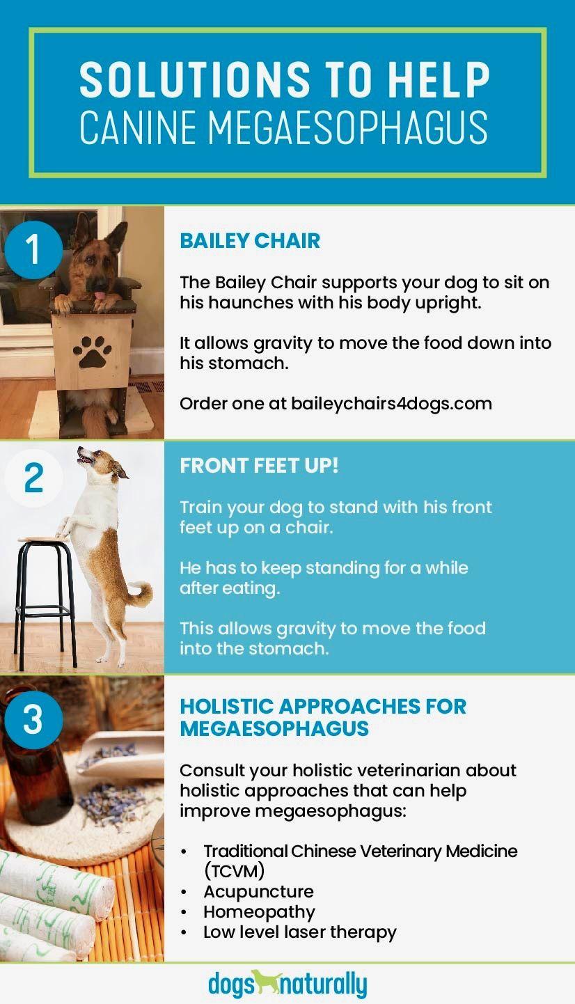 Congenital Megaesophagus Me In Dogs Dogs Naturally Dogs Megaesophagus In Dogs Training Your Dog
