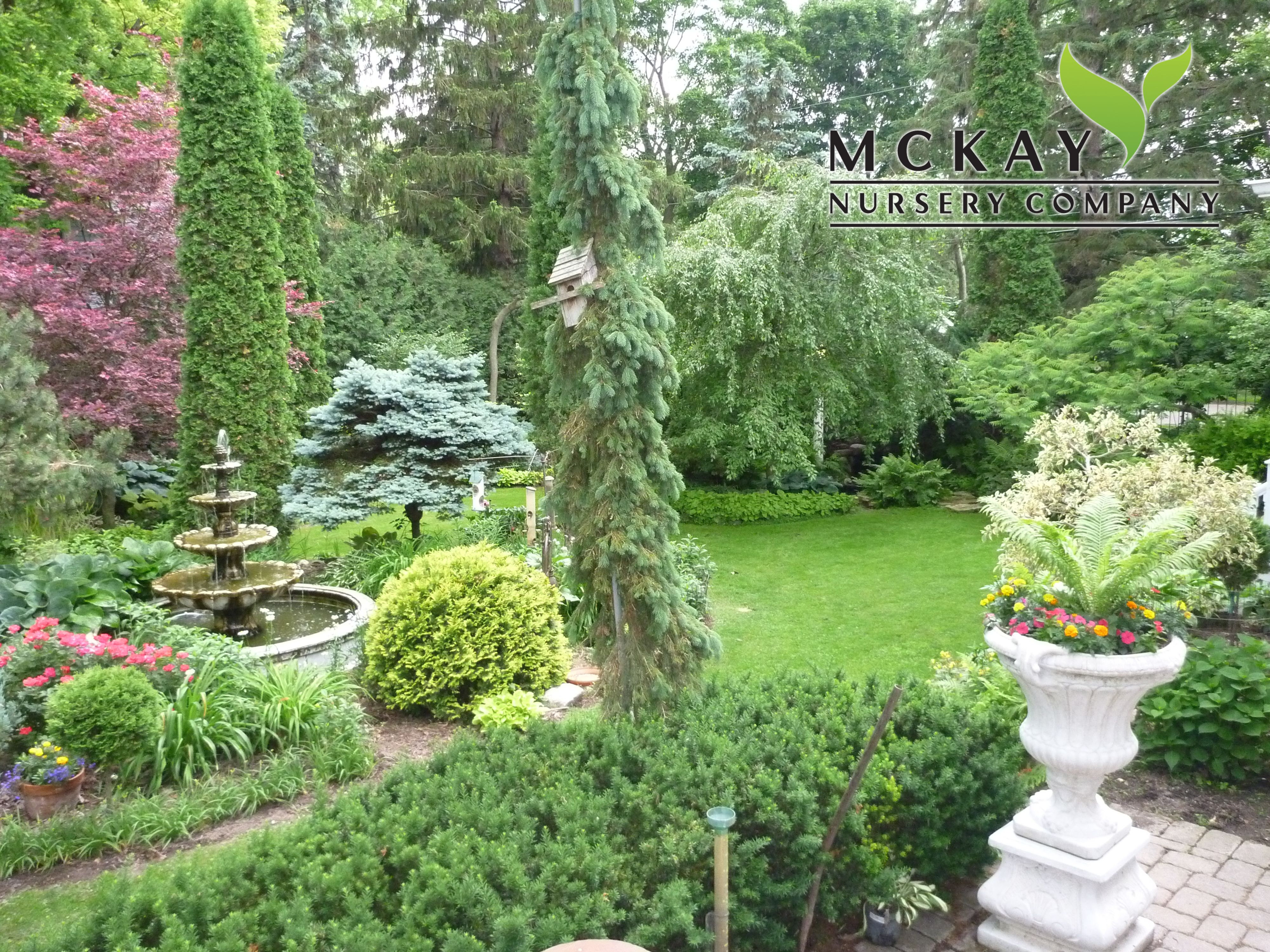 lush landscaping ideas. Love The Mixture Of Greens And Textures McKay Nursery Company - Lush Landscaping Ideas. Http Ideas E