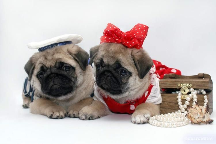 valentine's day pet clothes