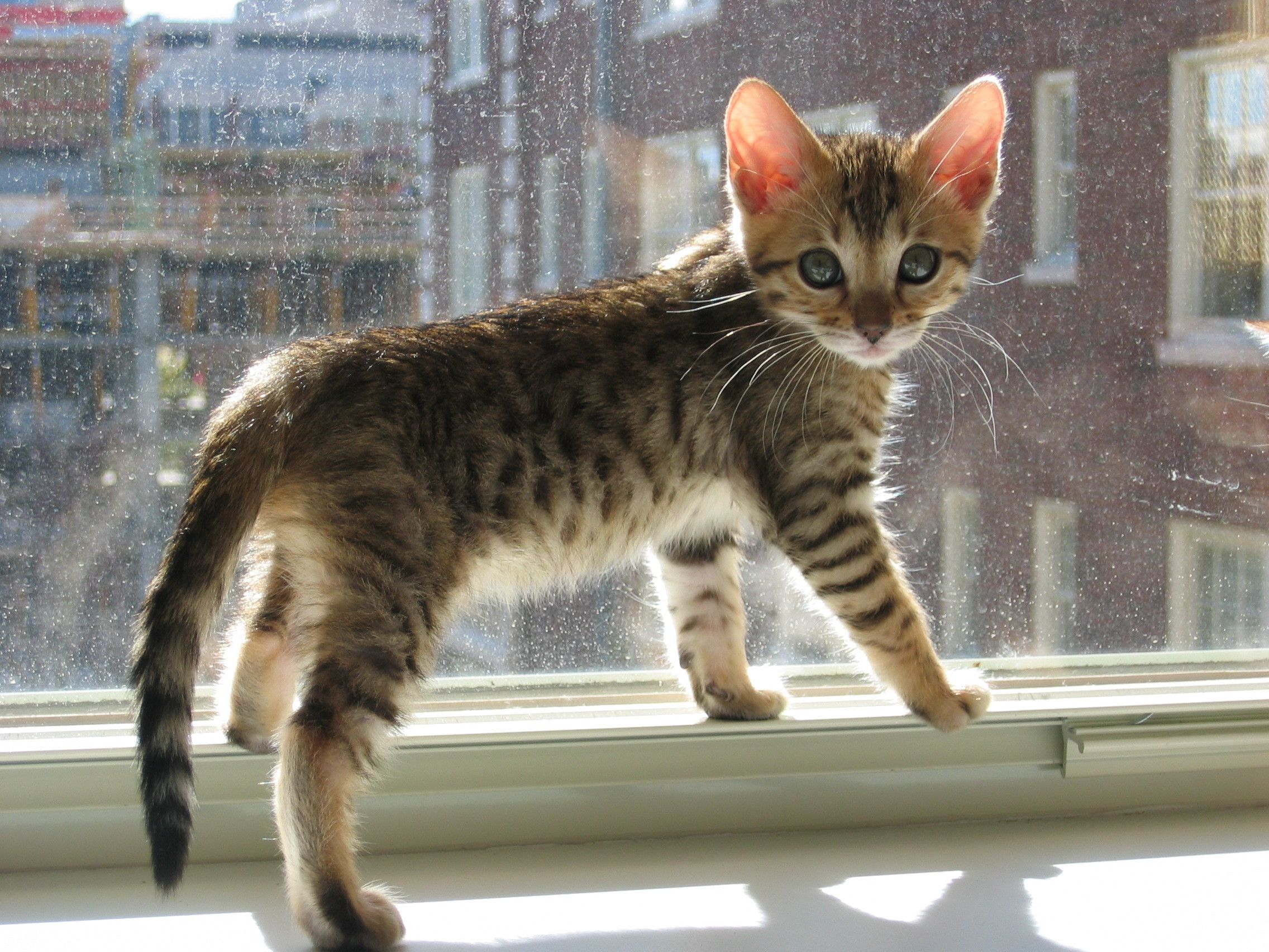 Http Imgur Com Xa89ree Yes I Know I M Beautiful With Images Cute Animals Animals Kittens Cutest