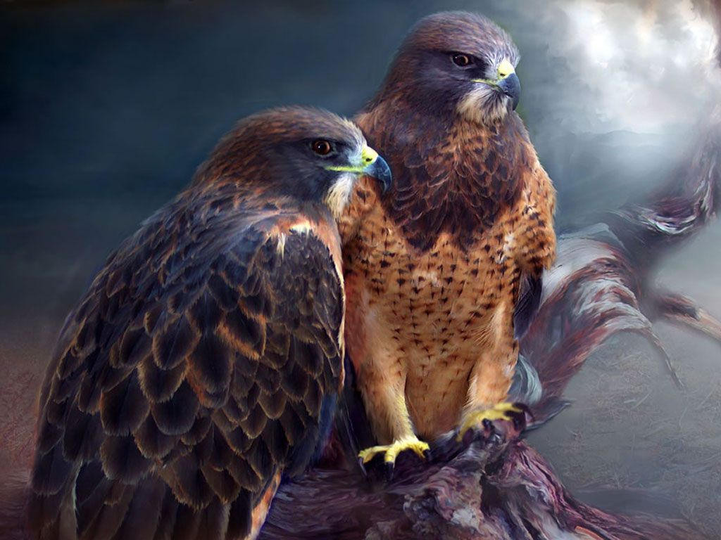 fondos para teléfonos - Eagles: http://wallpapic.es/animales/eagles/wallpaper-32605