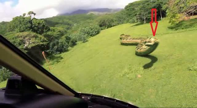 Video: Descubren gigantesca anaconda en la selva de Brasil