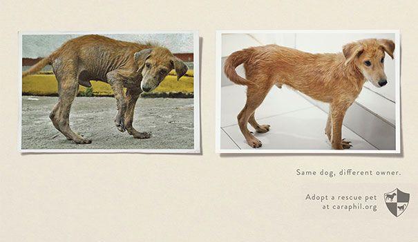 Same dog, different owner.