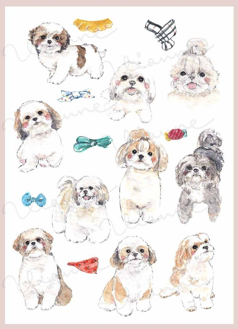 CLIP ART Watercolor Shih Tzu Set. 17 Images. Digital