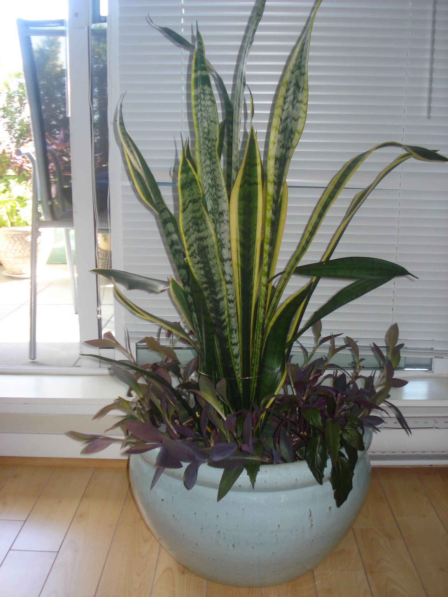 Purple Heart And Mother In Law S Tongue Plant Decor Plants Indoor Plants