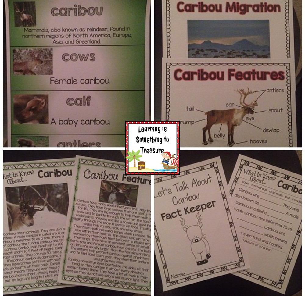 Science Teacher Job Facts: Let's Talk About Caribou: A Non Fiction Unit