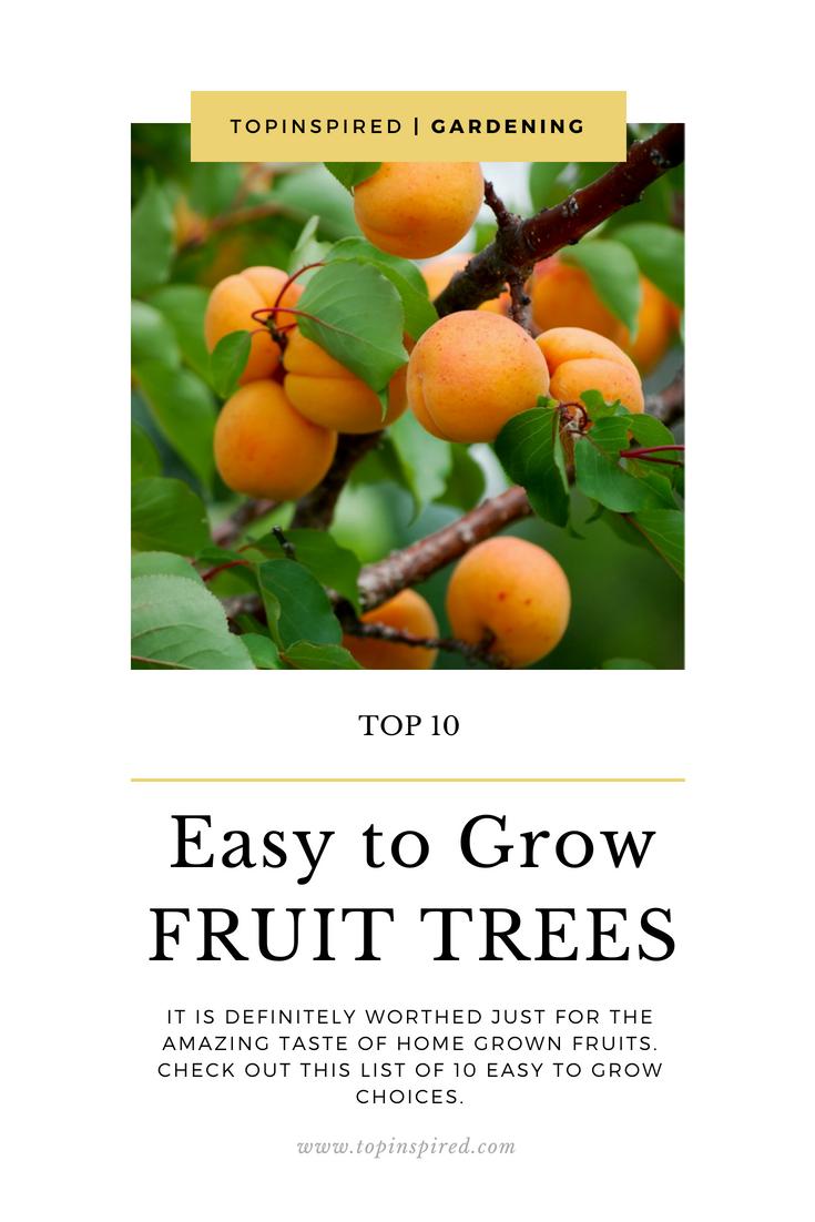 Top 10 Easy To Grow Fruit Trees Growing Fruit Fruit Fruit Trees