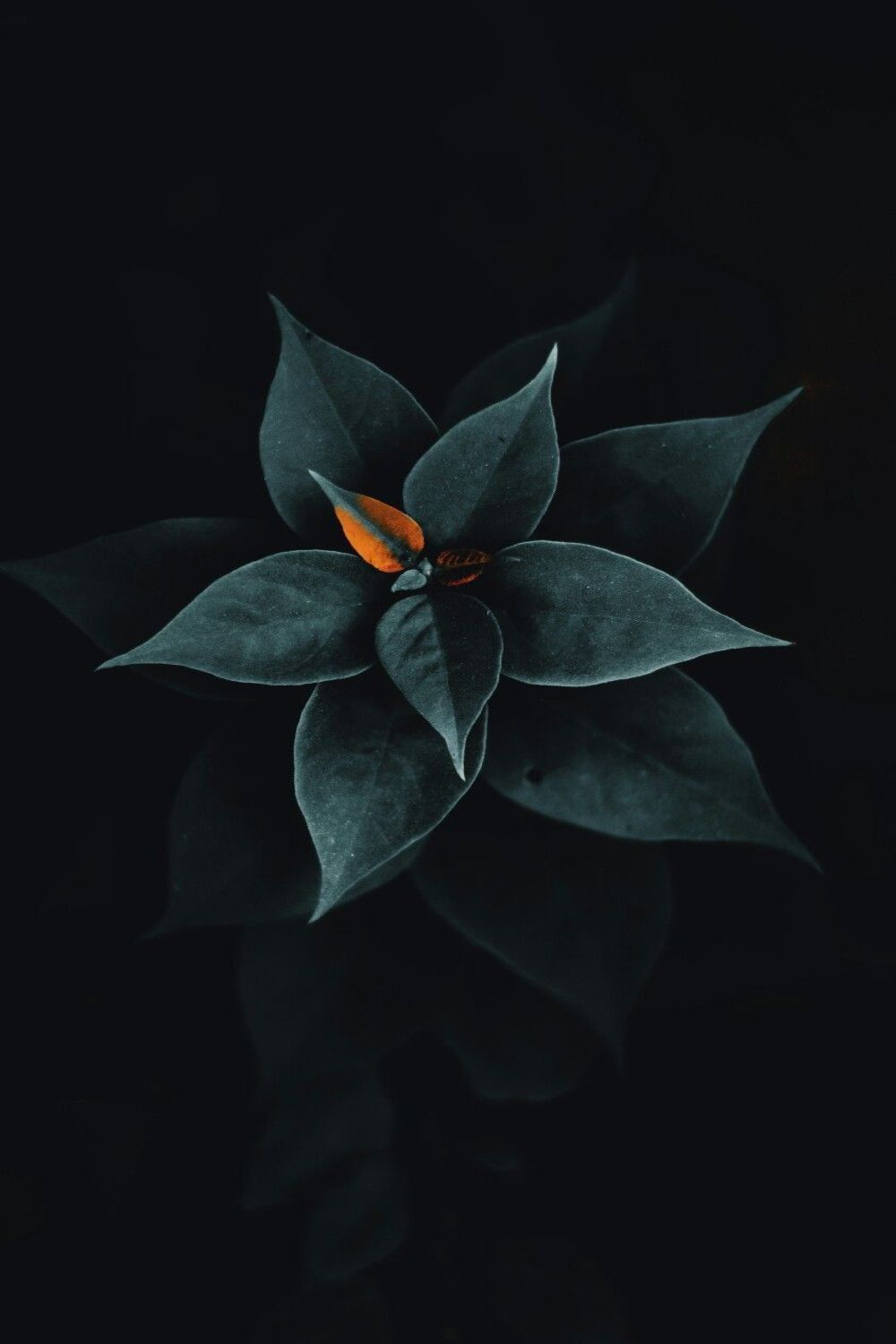 Best Black Wallpaper Hd 4k Free Downloads In 2020 Leaves Wallpaper Iphone Flowers Black Background Black Background Photography