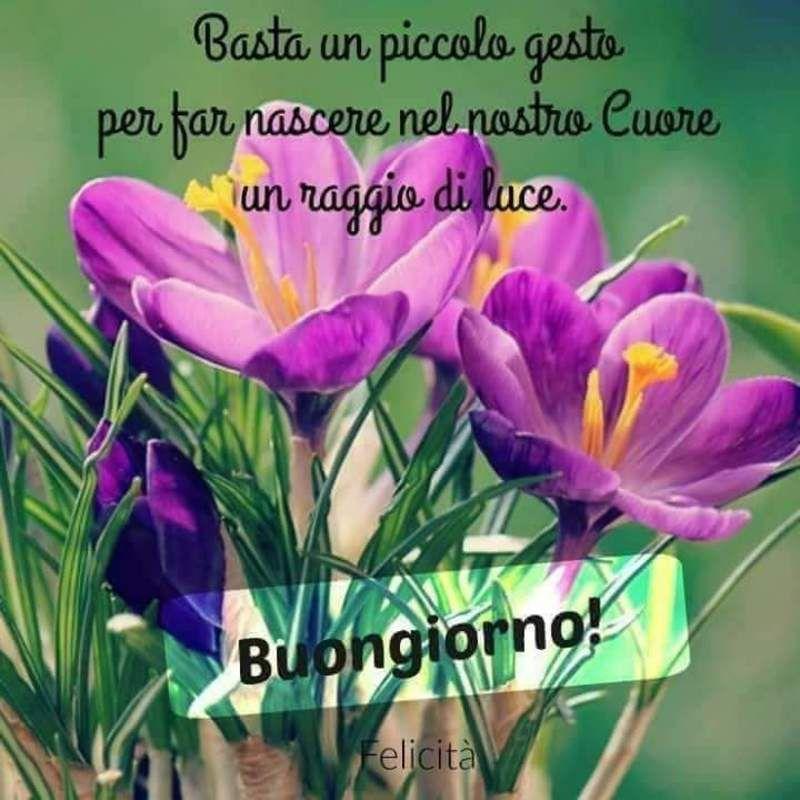 Immagini belle di buongiorno da scaricare gratis for Foto buongiorno gratis