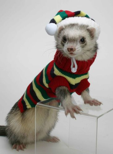 Marshall Pet Santa Hat for Ferrets and Small Animals