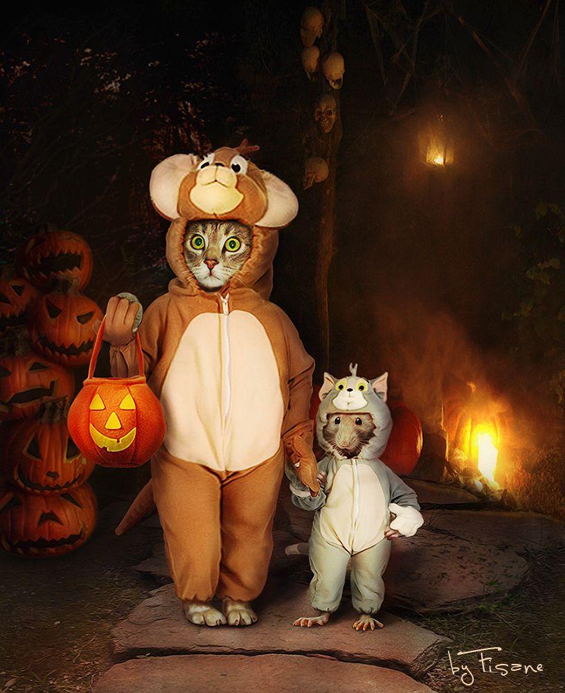 Хэллоуин картинки прикольные с животными