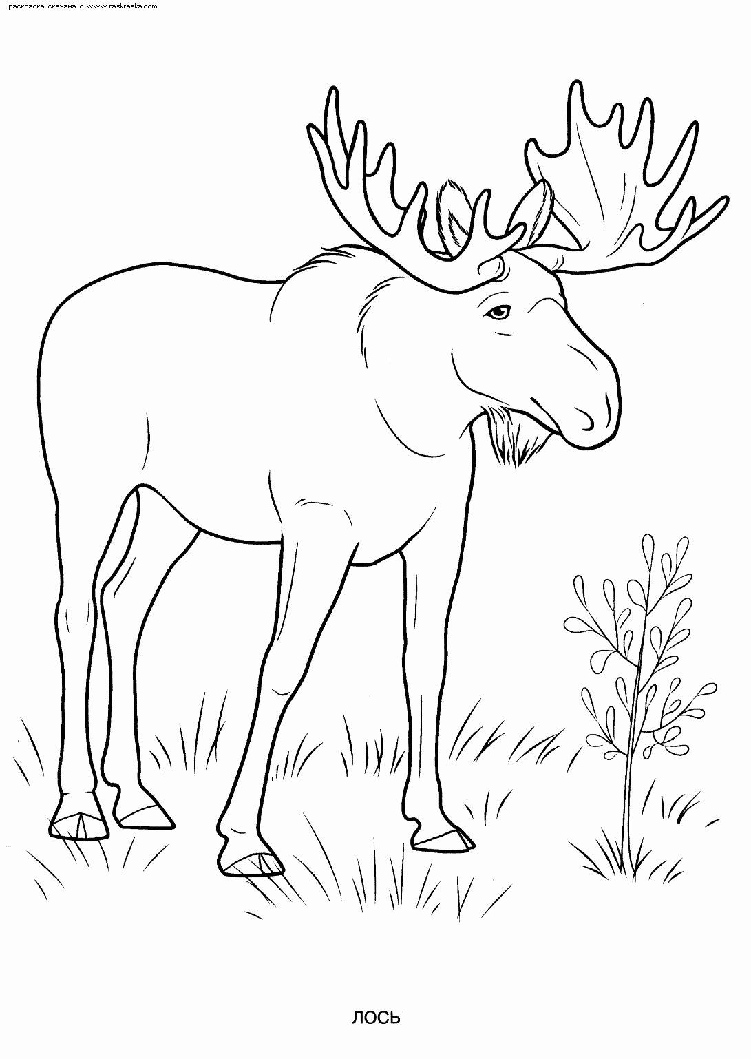 Coloring Activities For 7 Year Old Elegant D D N Dºn D N Dºd D D Dºd Dµ D D D D D Nˆd D Dµ D D D D Animal Coloring Pages Animal Coloring Books Coloring Books [ 1538 x 1091 Pixel ]