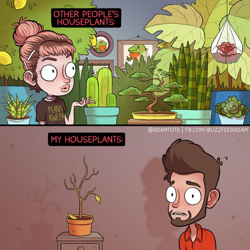 Literally Just 9 Comics About House Plants Fun Comics Funny Comic Strips Comics