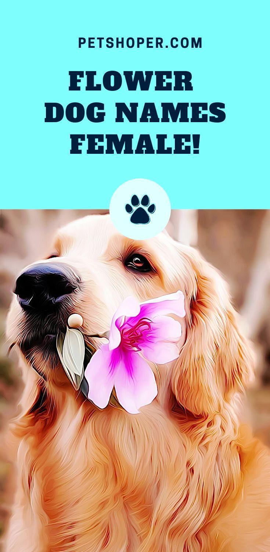 Flower Names For Dogs +160 Best Dog names, Dog names