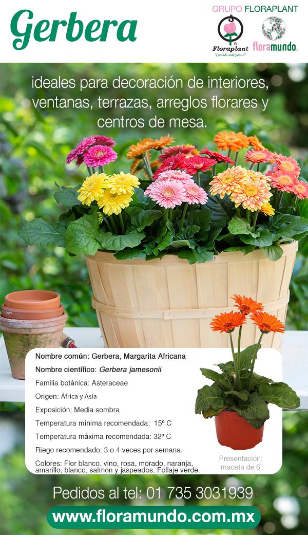 Gerbera Plantas Ornamentales De Sol Cultivo De Plantas Jardineria Y Plantas