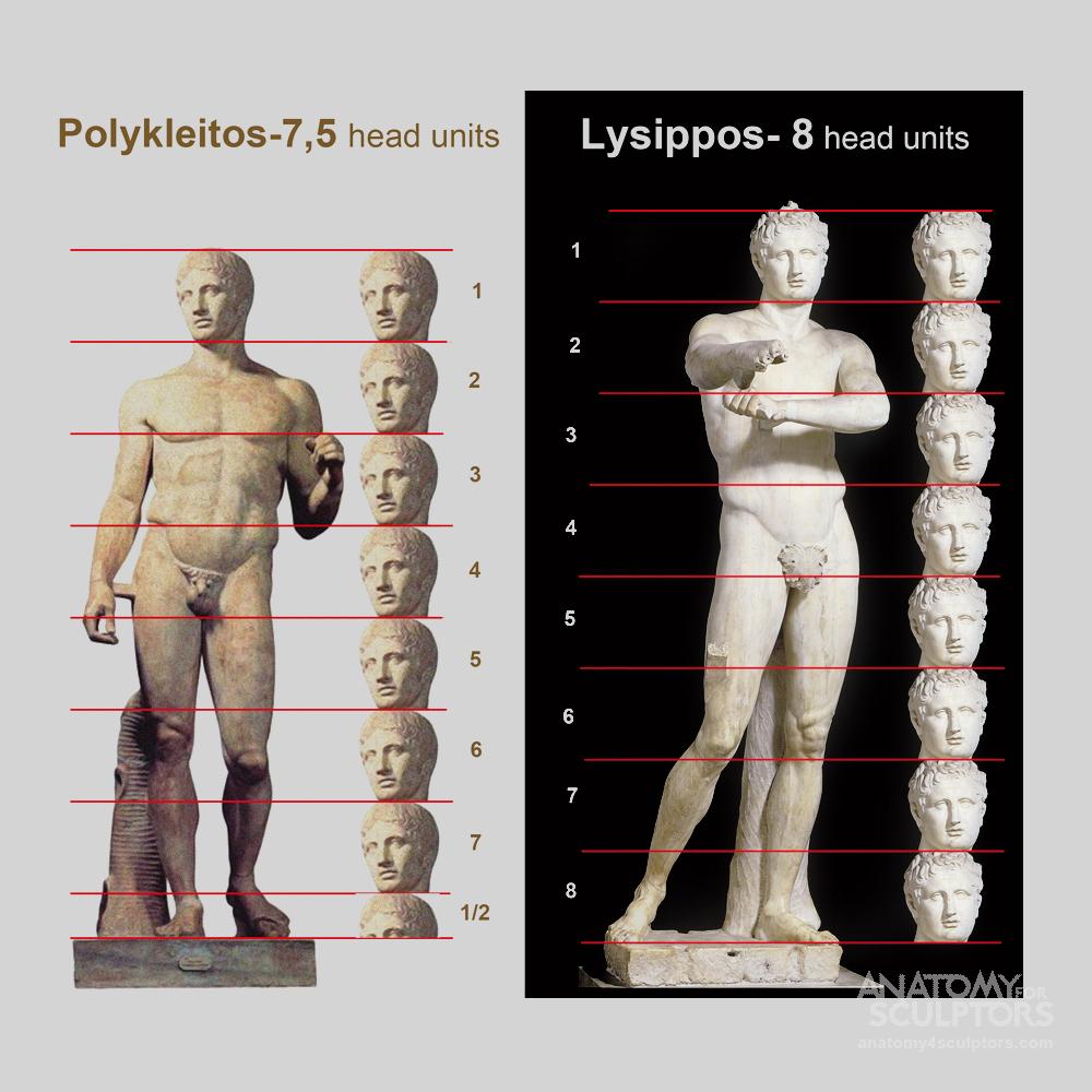 Anatomy For Sculptors - anatomy   Φ   Pinterest   Anatomy, Anatomy ...