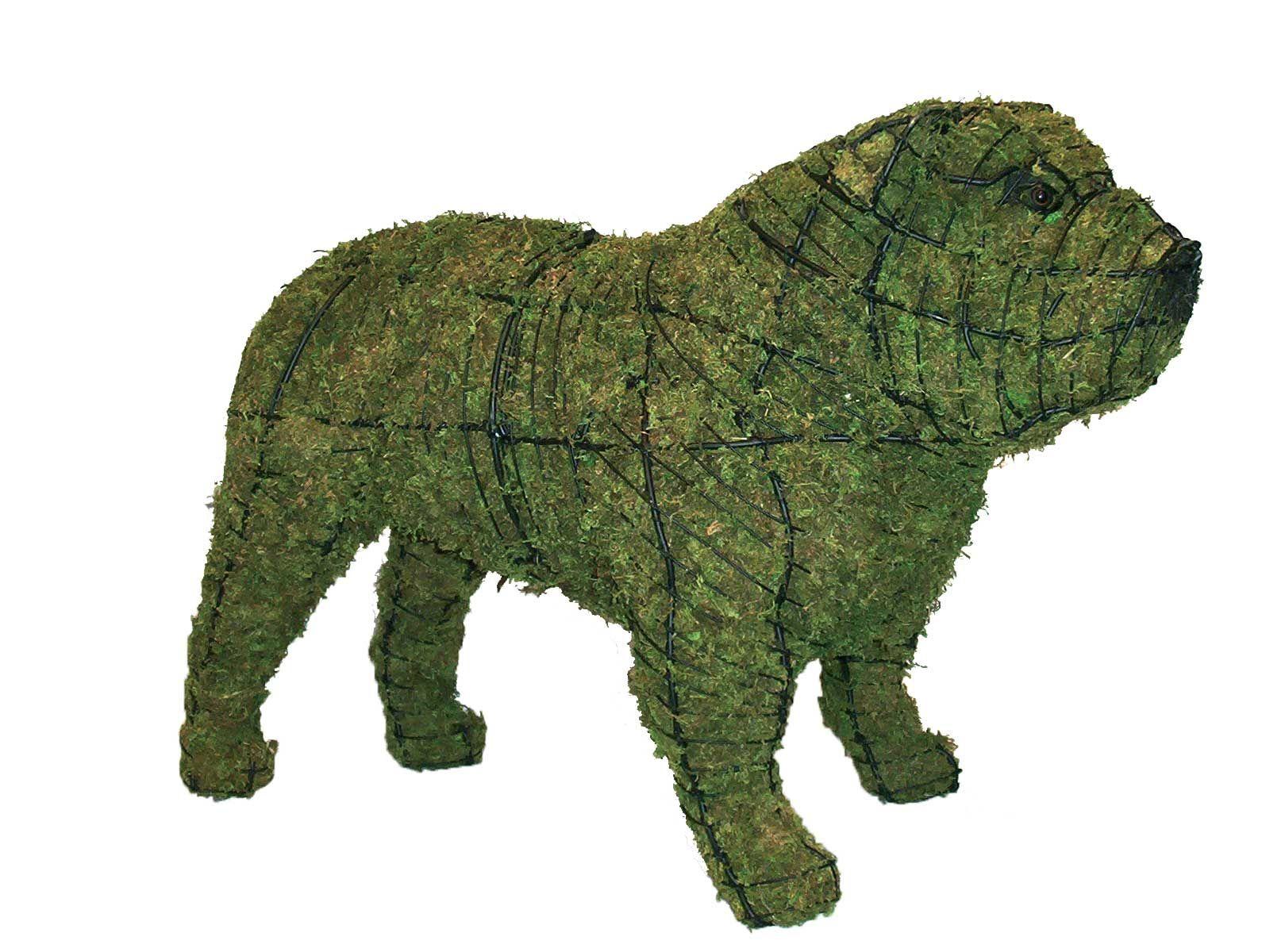Bulldog 16 Quot Mossed Www Braungroup Com Topiary