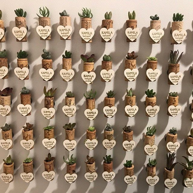 Succulent Wine Cork Favors with Cuttings (20 to 30