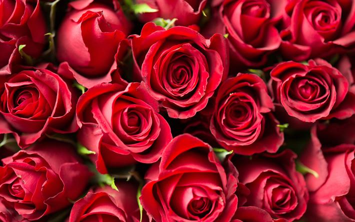 herunterladen hintergrundbild rote rosen 4k rosen rot. Black Bedroom Furniture Sets. Home Design Ideas