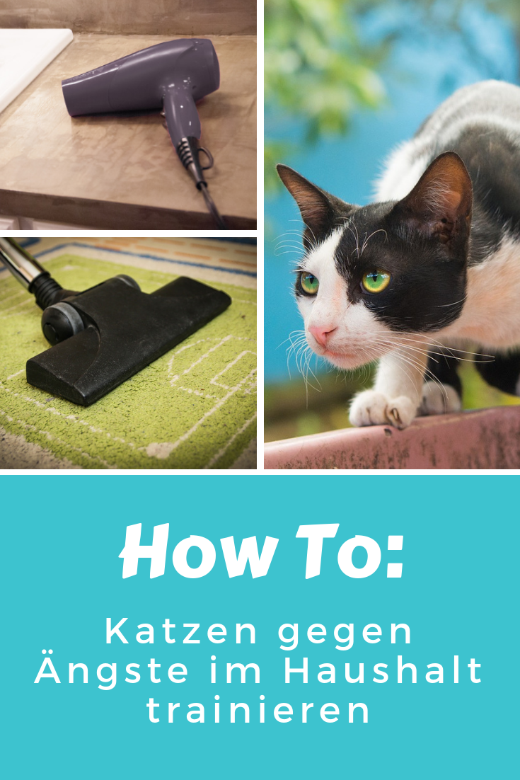 katze trainieren gegen ngste so geht s cats katzen katzen hacks und katzen infos