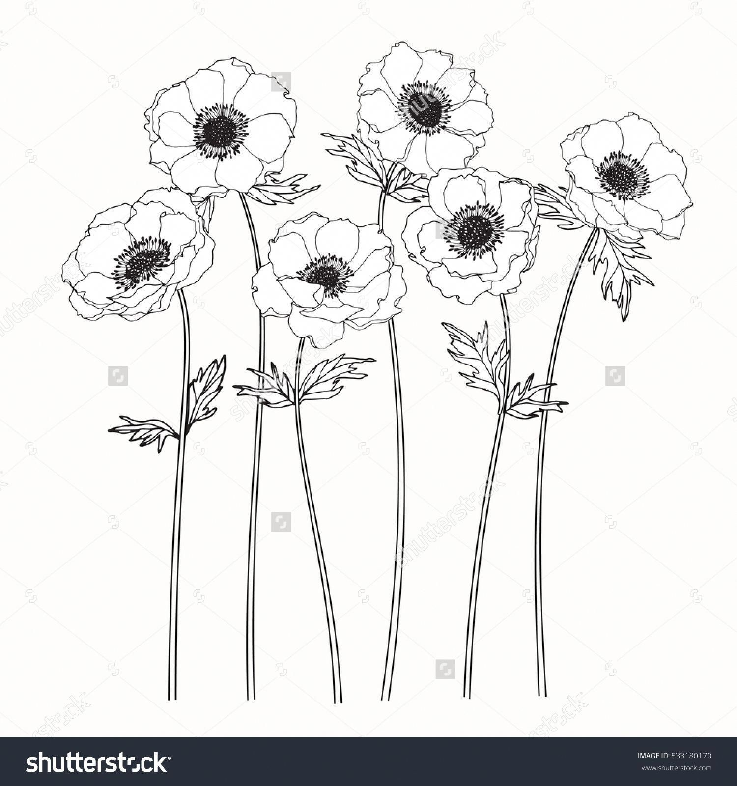 Drawing Anemone Flower On White Backgrounds Vector Flowersbackground Flower Drawing Anemone Tattoo Anemone Flower