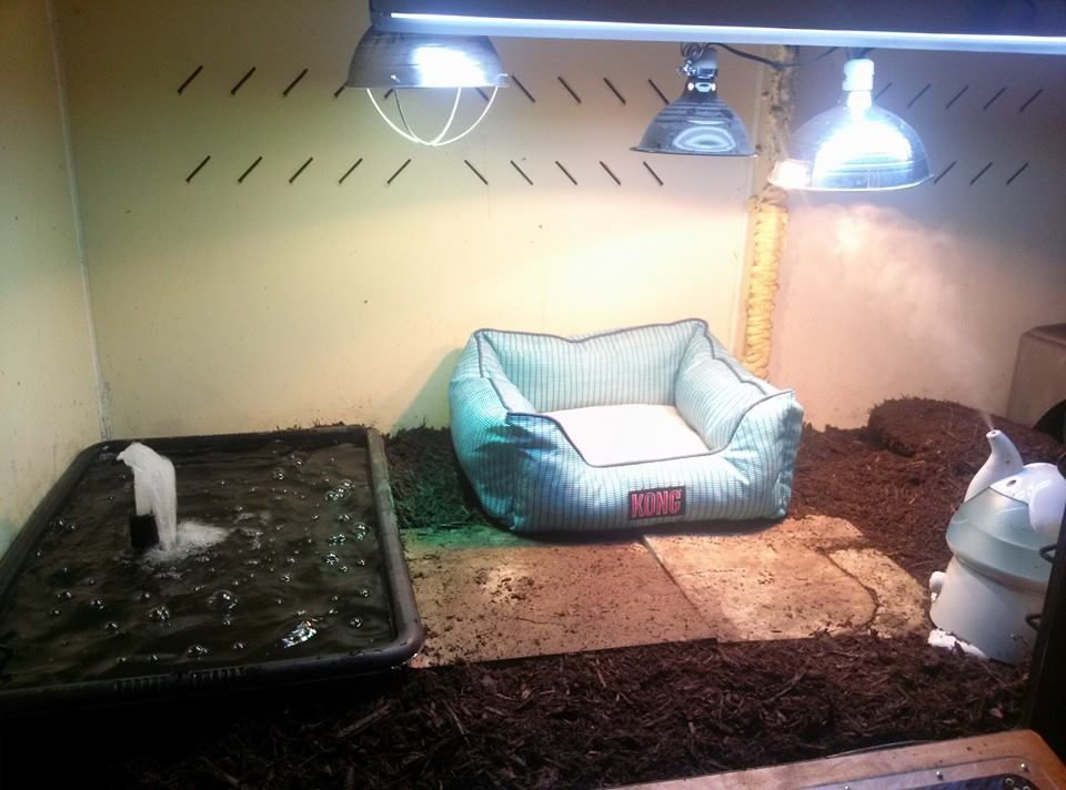 my argentine black and white tegu cage this is showing half of it