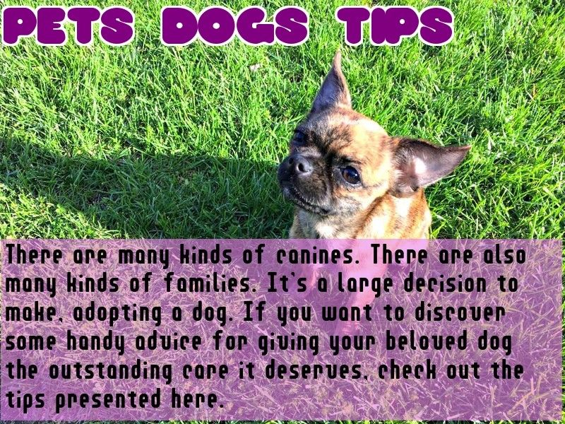 Awesome Dog Training Tips That Anyone Can Use With Images Dog