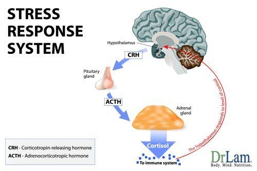 Symptoms Of Stress Introducing The Neuroendometabolic Stress Response Cortisol Ejercicios Para El Cuello Fibromialgia