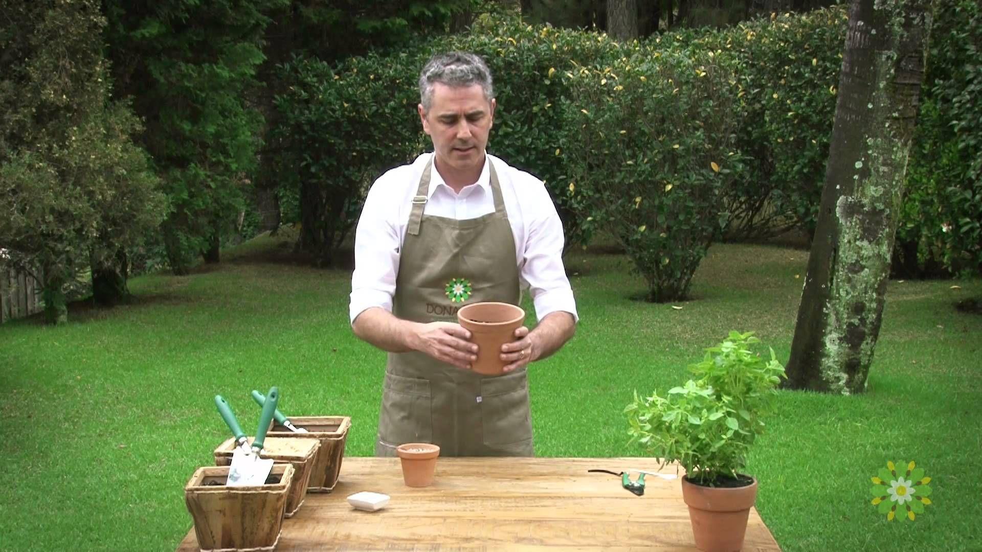Aprenda a plantar manjericão usando sementes