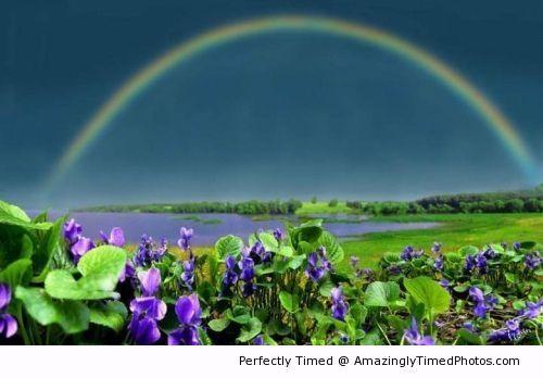 Rainbow dreams,`` alem do horizonte deve ter algum lugar bonito pra viver em paz...``
