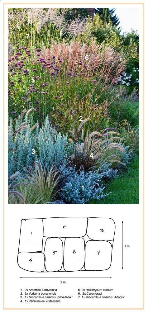 Ornamental Grasses Border ........................ 1. White Sagebrush Silver Queen (Artemisia ludoviciana) 2. Grays Sedge (Carex grayi) 3. Curry Plant (Helichrysum italicum) 4. Black-Flowered Fountaingrass (Pennisetum viridescens) 5. Tall Verbena (Verbena bonariensis) 6. Eulalia, Maiden Grass Adagio (Miscanthus sinensis) 7. Eulalia, Maiden Grass Silberfeder (Miscanthus sinensis)