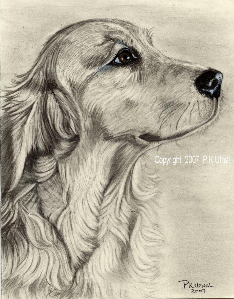 Pencil Dog Art Golden Retriever Print 2 By Pk Ufnal Dog Sketch